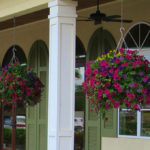 best plants for hanging baskets in full sun