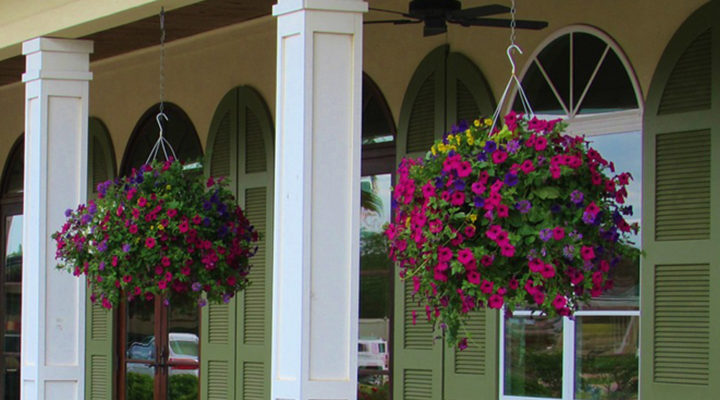 The Best Plants for Hanging Baskets in Full Sun – Practical Guide