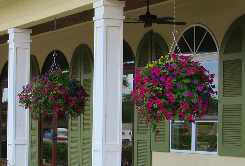 Hanging Flower Baskets For Full Sun : The best plants for hanging baskets in full sun