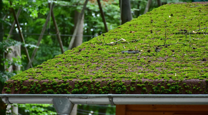 The Best Way to Remove Moss From Roof – Homoq.com Guide