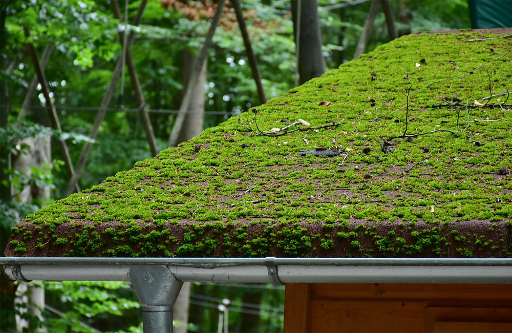The Best Way To Remove Moss From Roof Homoq Com Guide