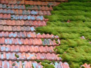 roof moss killer