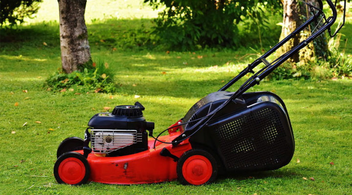 How to Maintenance Lawn? Best 4 Secret and Researched Tips