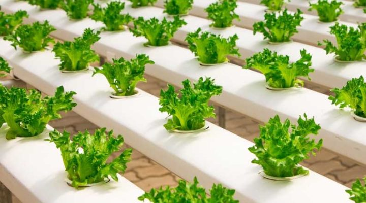 Essential Tips to Count on for Growing a Hydroponic Garden