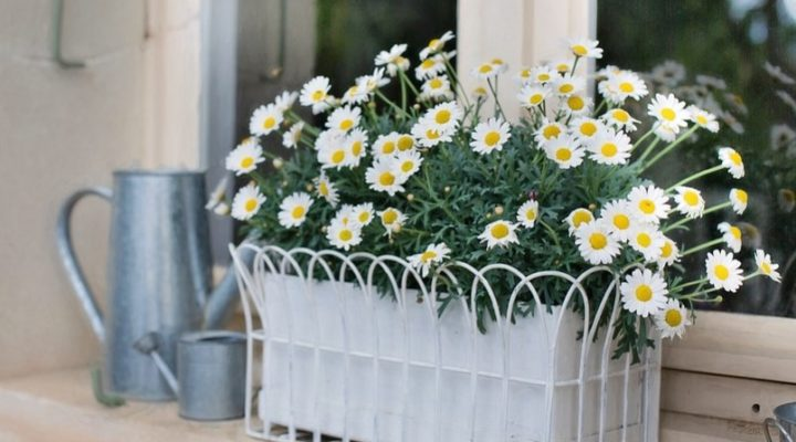 Select The Right Size Of Planter Box For Proper Growth Of Plants