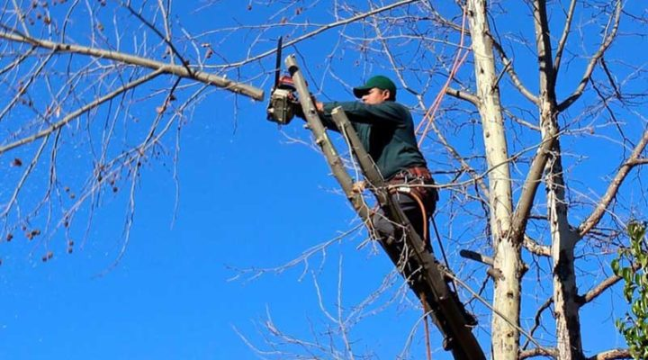 The Significance of Trimming and Pruning for Your Trees