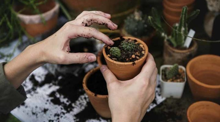7 Best Easy Gardening Tips and Tricks to Make Gardening Easier
