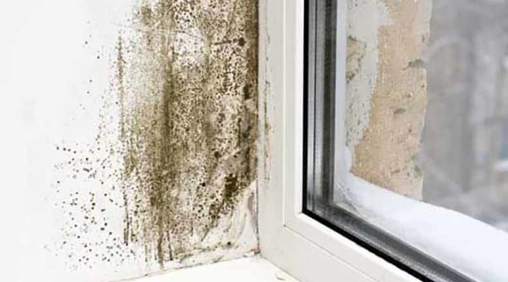 How to Prevent Mold in Your Home This Winter