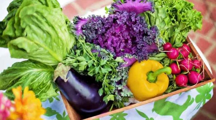 Vegetables That You Can Plant in January