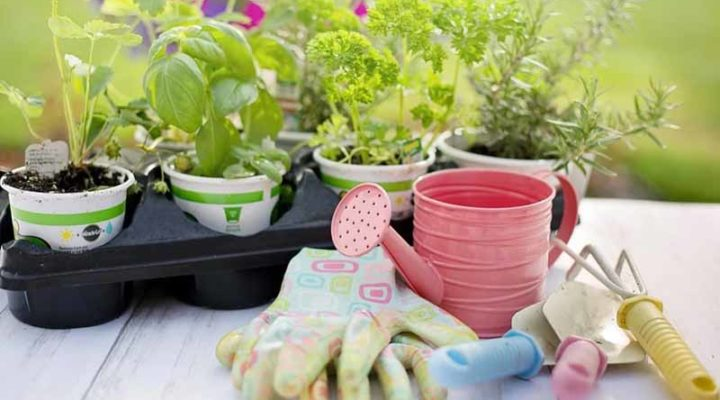 Essential Tools that are a must-have for every Gardener