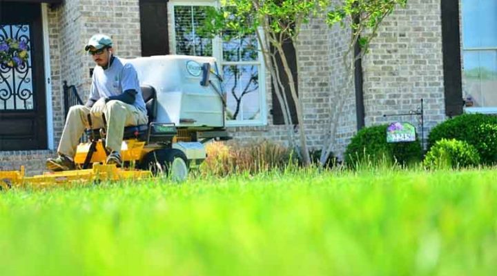 5 Lawn Care Tips for this Summer