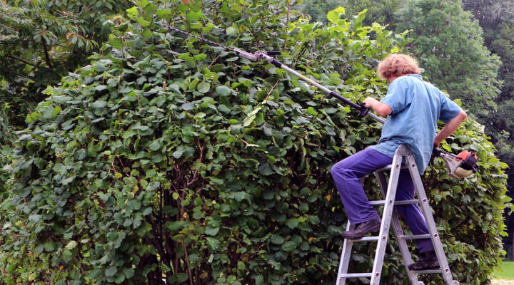 The Insider's Guide to Pole Hedge Trimmer