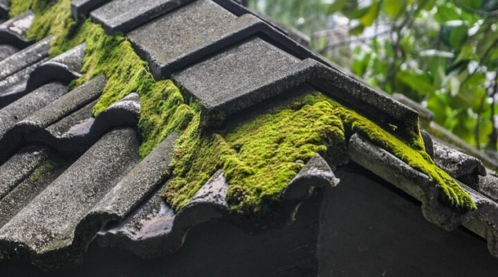 Why Moss is Not Good for the Roof? How to Clean Roof Moss?