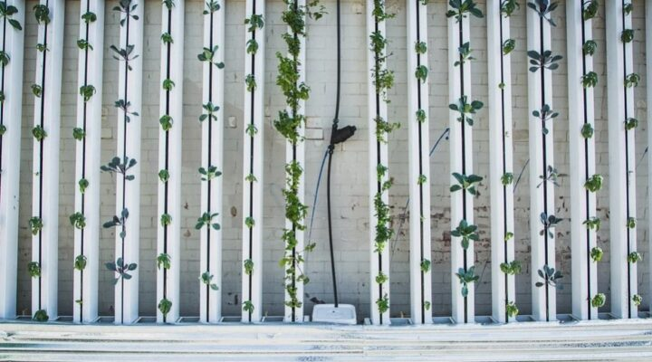 Vertical Garden: Your Next Home Project