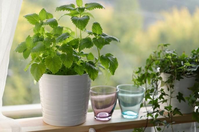 natural plant