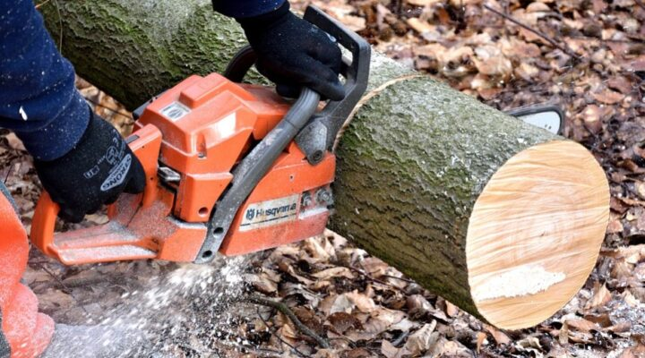 Let' know, What is the Best Small Chainsaw for Lite Works?
