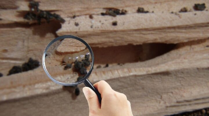 What Happens During a Termite Inspection?