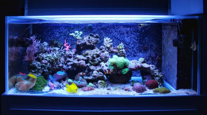 A Step by Step Guide on How to Clean a Dirty Fish Tank