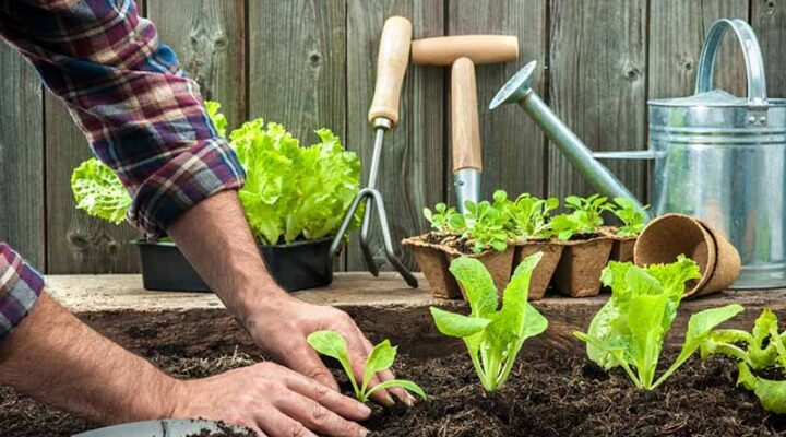 Gardening and Grow Tips for Planting Vegetables