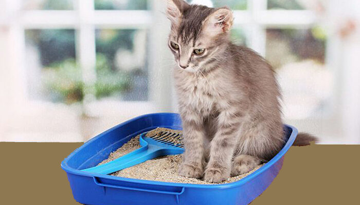 How much cat litter do you need per month?