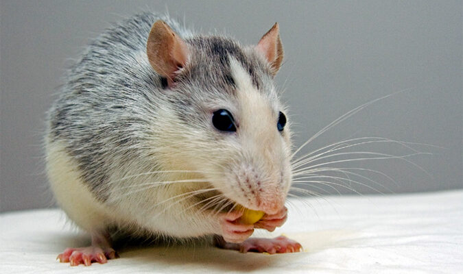 What to do if you have mice in your basement?