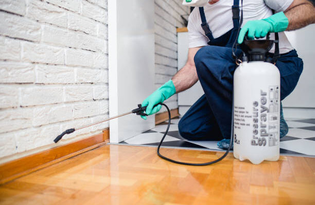 Why Should You Hire Professional Pest Control Townsville, QLD?