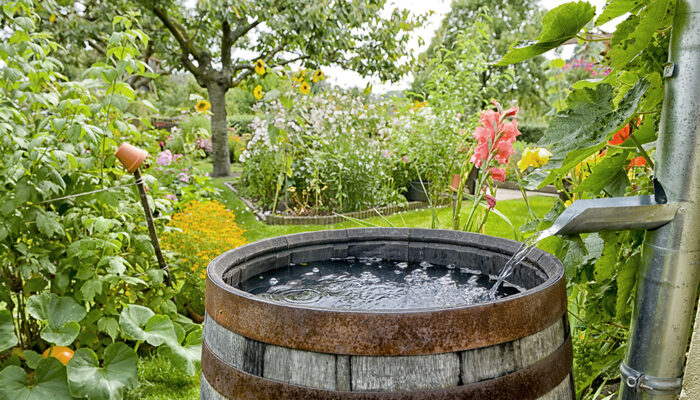6 Reasons to Consider Storing Rain Water