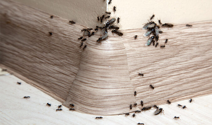 Top 5 Factors to Consider When Hiring Pest Control Companies