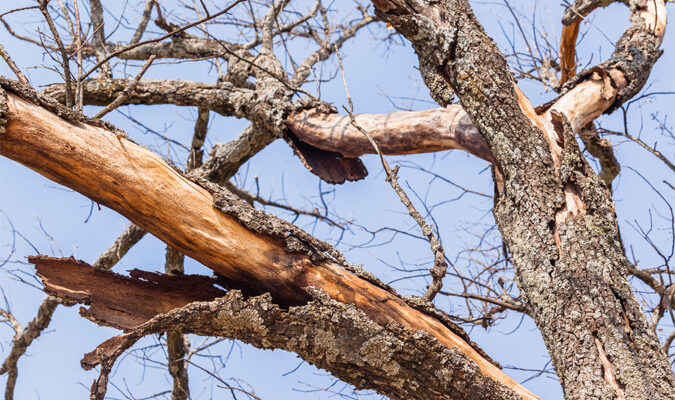 The Signs of a Dying Tree: A Guide for Homeowners