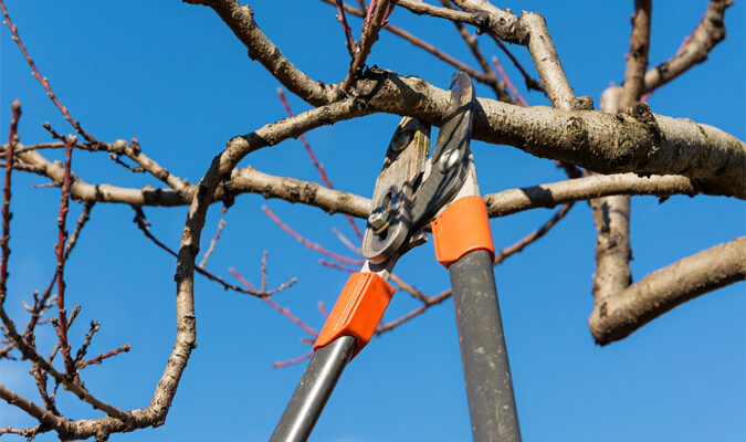 Your Ultimate Guide to Winter Tree Care