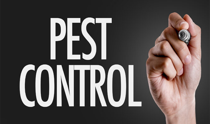 4 Pest Control Tips for Homeowners