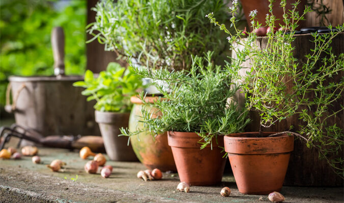 Potted Plant Ideas That Make Your Property Sparkle