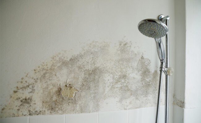 4 Signs of Mold in Your House You Shouldn't Ignore