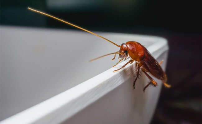 3 Warning Signs of a Pest Infestation in Your Home