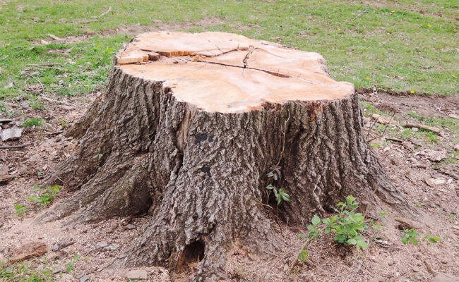 A Complete Guide to Stump Grinders