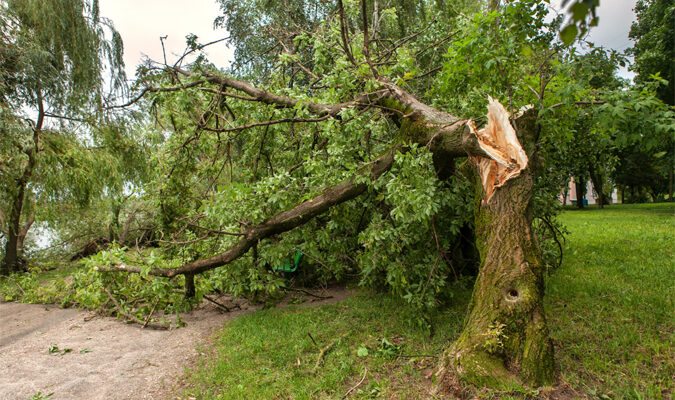 When to Hire a Tree Removal Company