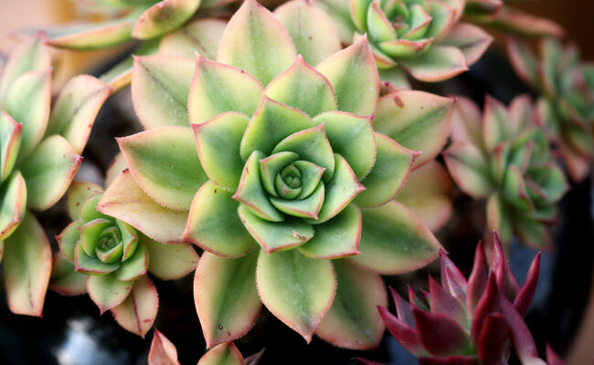These Are the Three Best Beginners' Plants for Your House