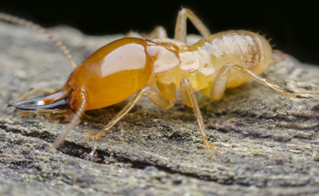 The True Cost of Termite Damage, Explained