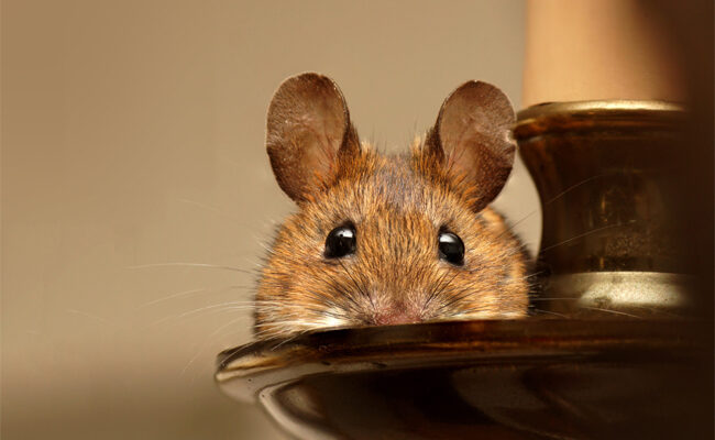 5 Warning Signs That You Are Dealing With a Pest Infestation