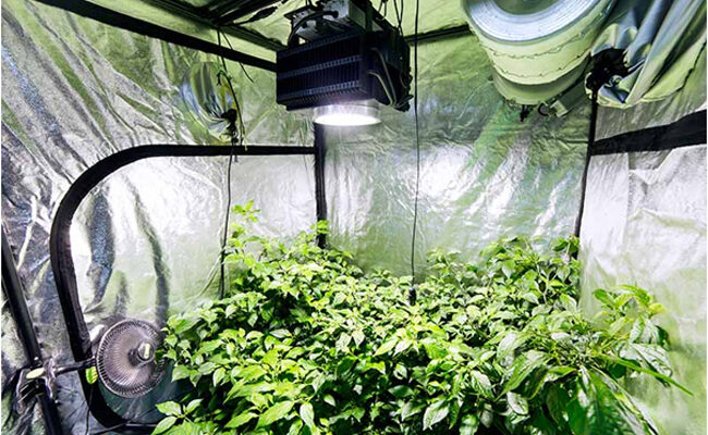 All You Need to Know About Grow Room Ventilation