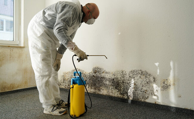 Everything to Consider When Choosing a Mold Removal Service