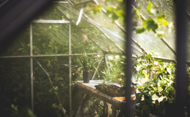 Your Quick Guide to Setting up a Greenhouse Garden