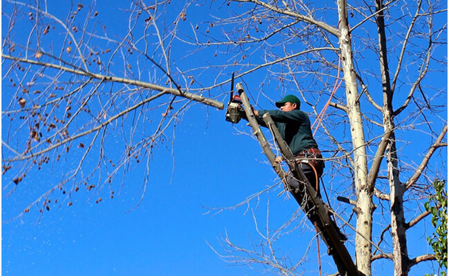 How to Get Hired in the Tree Services Industry