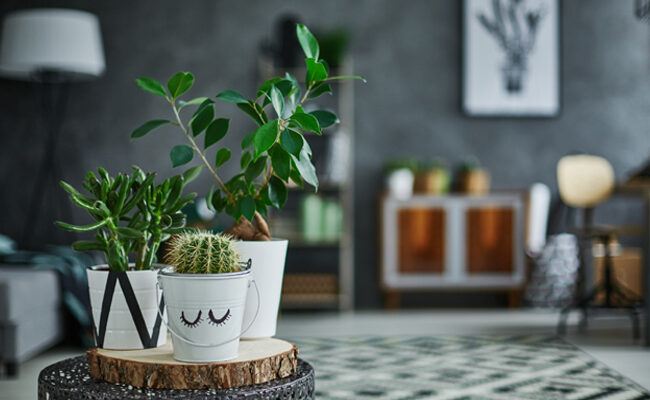 Breathing New Life Into Your Home: The Best House Plants That Anyone Can Take Care Of