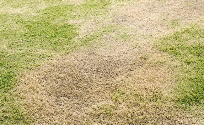 What Causes Dead Grass Spots on a Lawn?