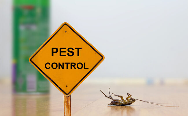 The Brief Guide That Makes It Simple to Choose a Pest Control Company