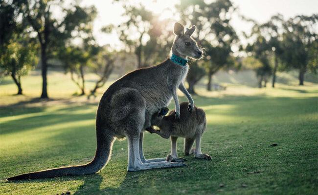 7 Tips for Surviving the Australian Summer
