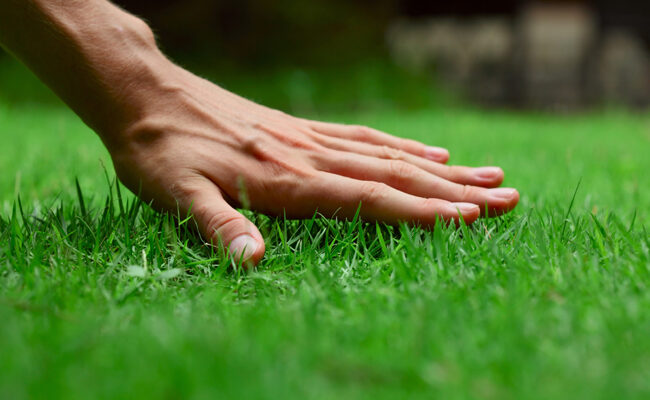 How to Take Care of Your Lawn: A Guide for Homeowners