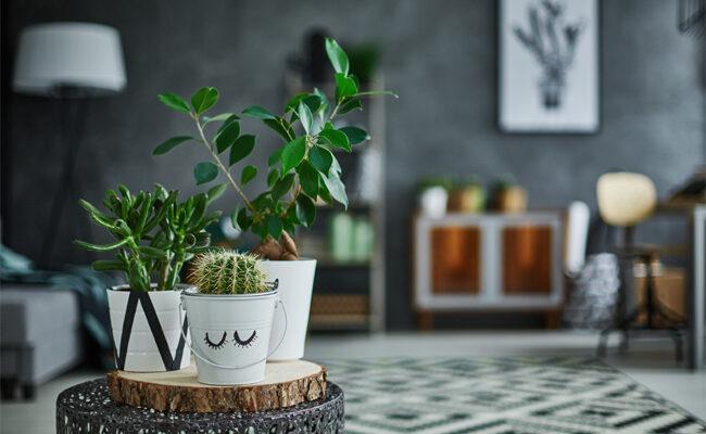 10 Beautiful Houseplants With An Exotic Feel