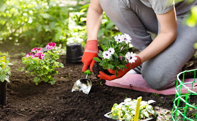 9 Basic Health Benefits of Gardening